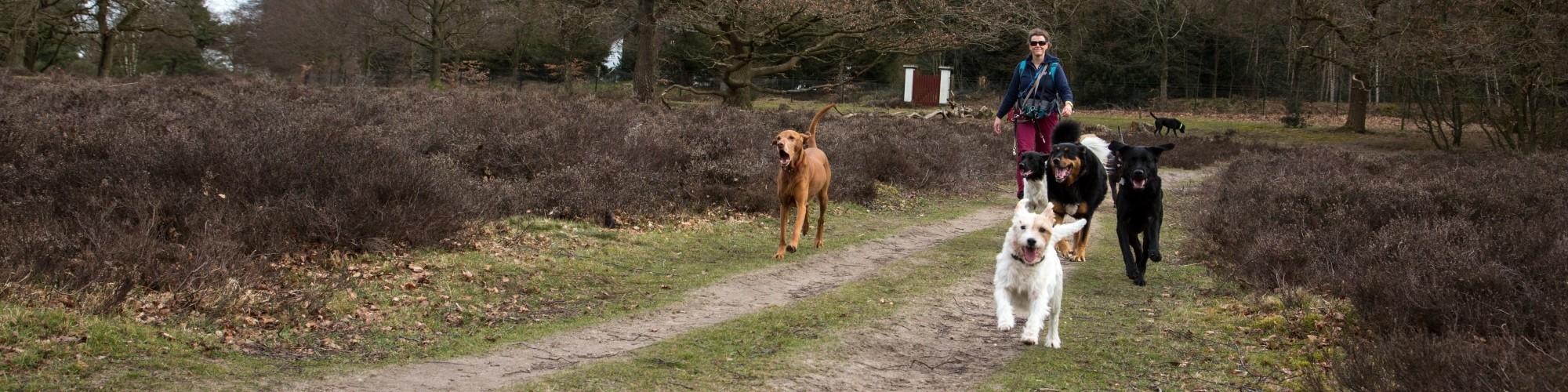 Hond uitlaten Hilversum